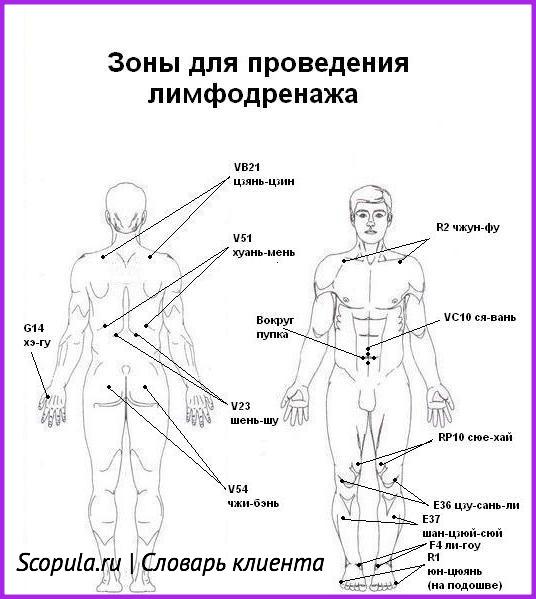Зоны для проведения лимфодренажа
